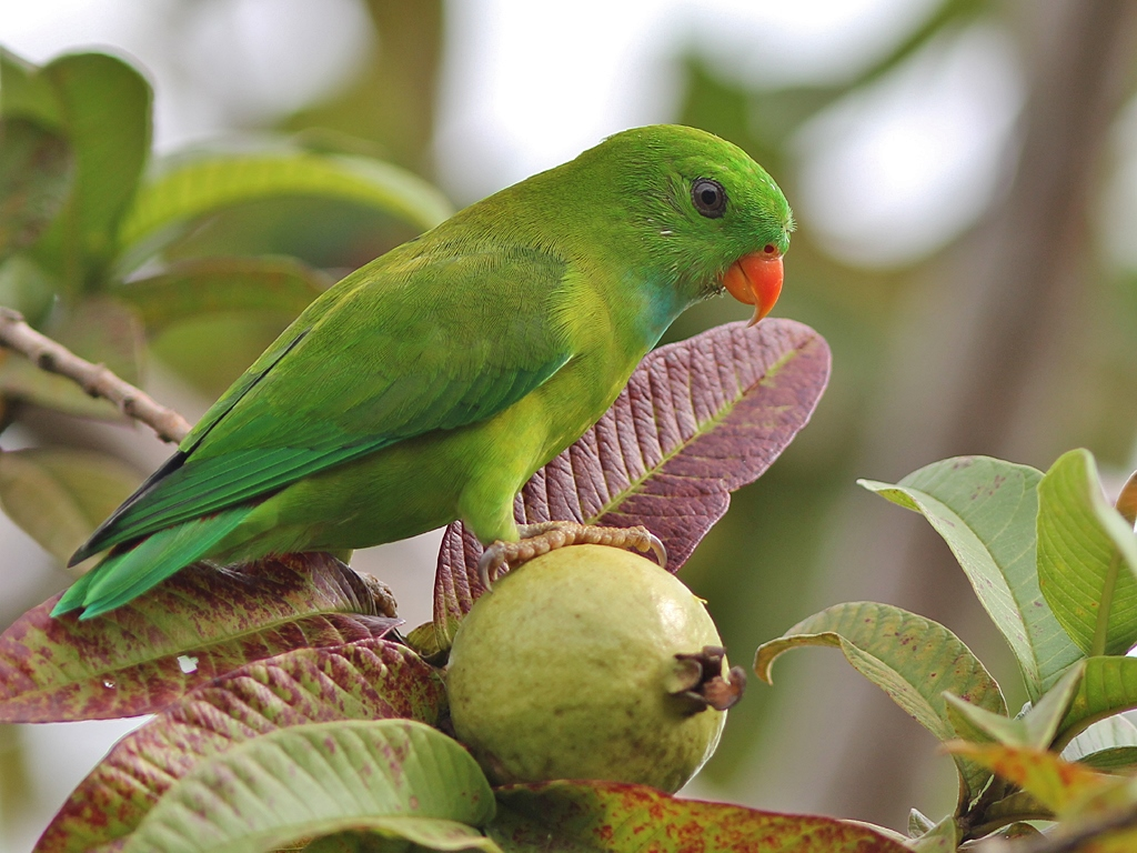 Do Parrots Eat Hot Dogs