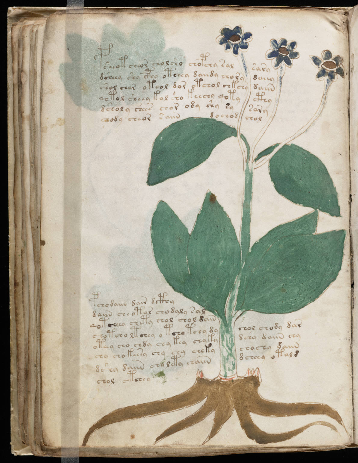 Voynich Manuscript Facsimile Voynich Manuscript