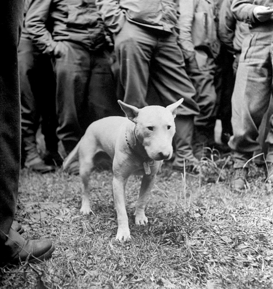 Willie-Patton-LIFE-1944.jpg