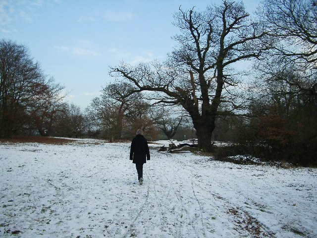 File:Winter Walking in Epping Forest - geograph.org.uk - 97705.jpg