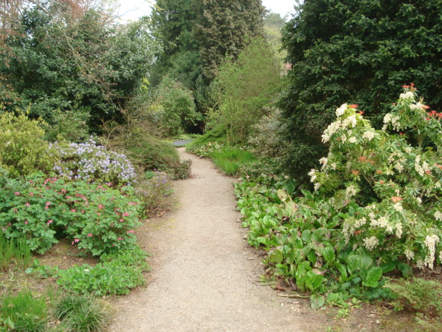 Woodland Garden at Berrington Hall - geograph.org.uk - 454601