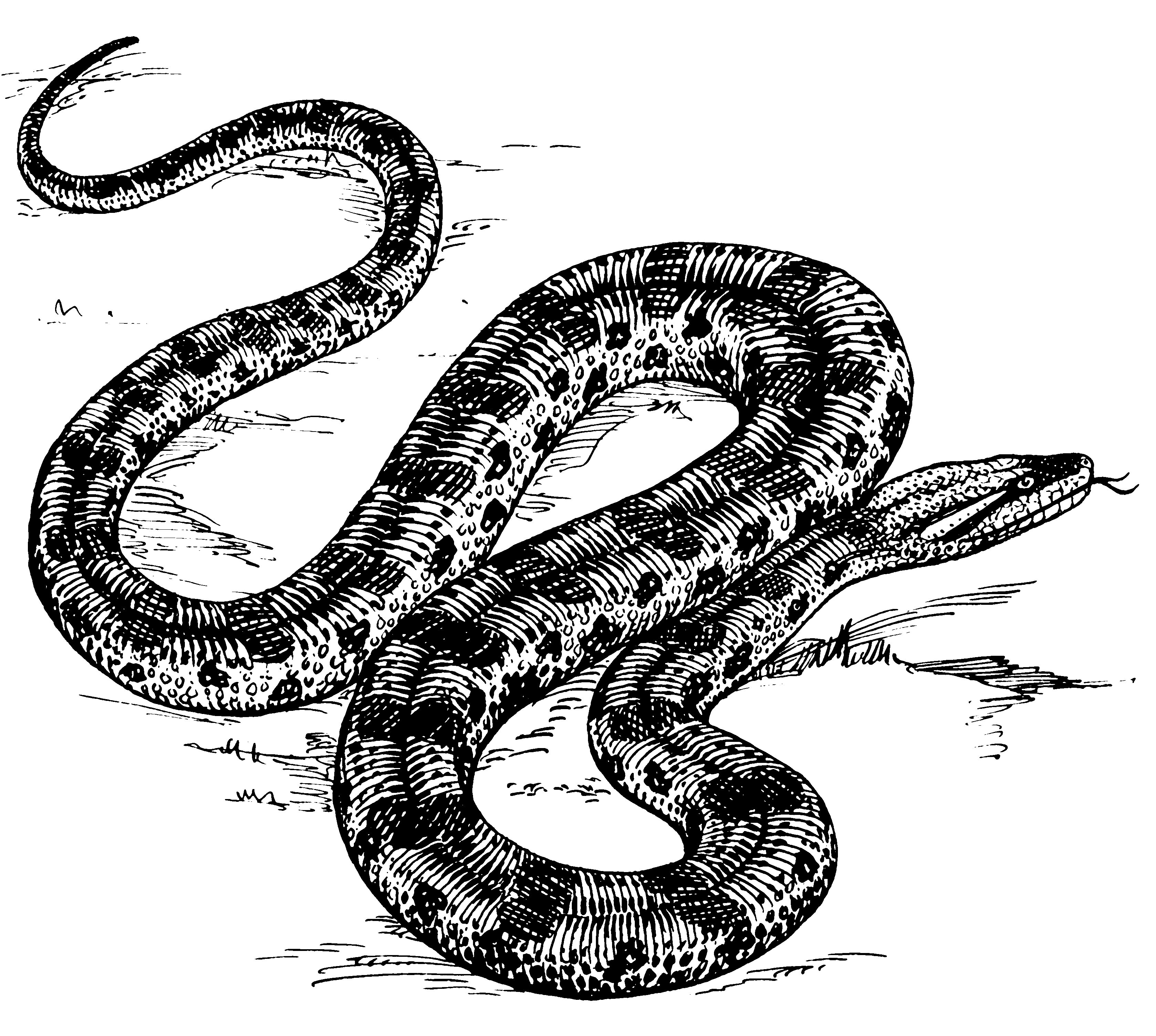 Drawing Lines With Python : File anaconda psf wikipedia