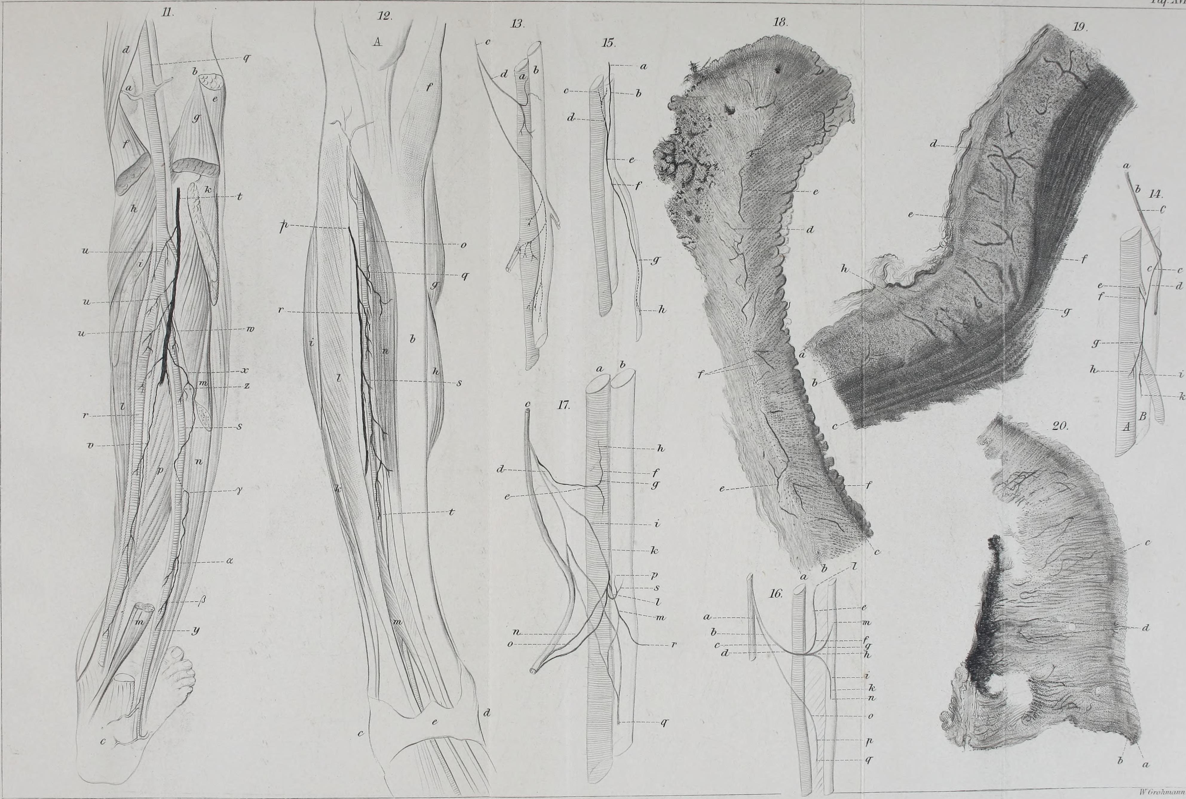 File:Archiv für Anatomie, Physiologie und wissenschaftliche Medicin ...
