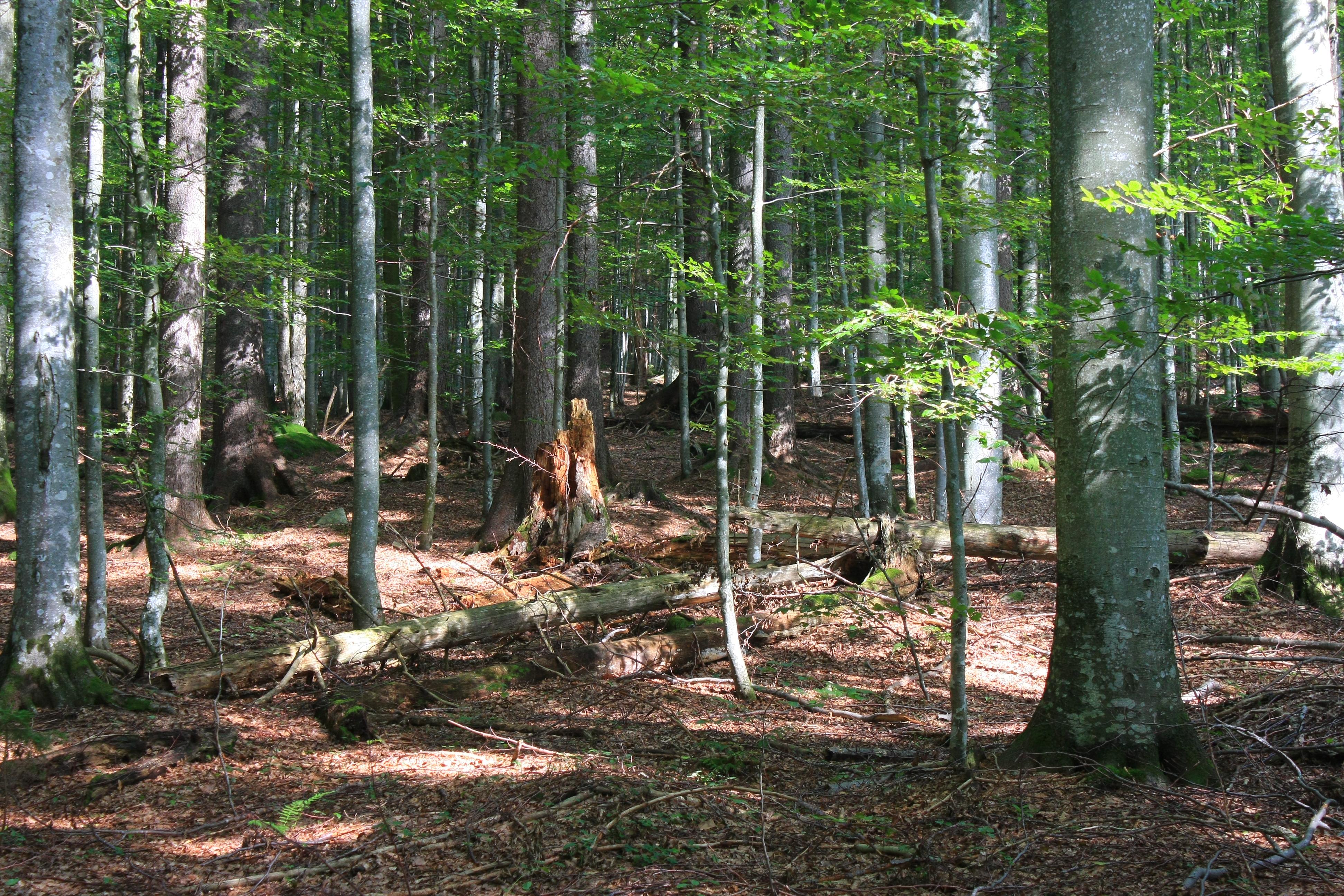 File Bayerischer Wald Rachel 001 Wikimedia mons