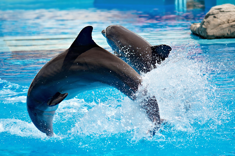 Dolphin Shows In Myrtle Beach Sc
