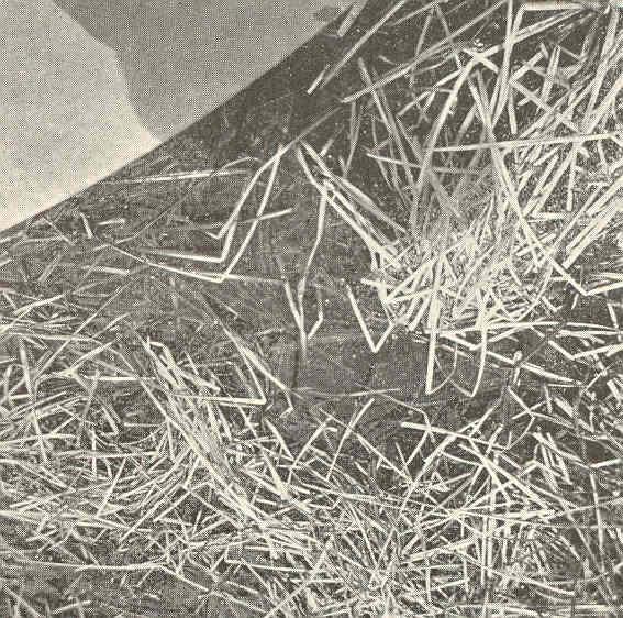 File:FMIB 41583 Nests of the Dogfish (Almia calva).jpeg