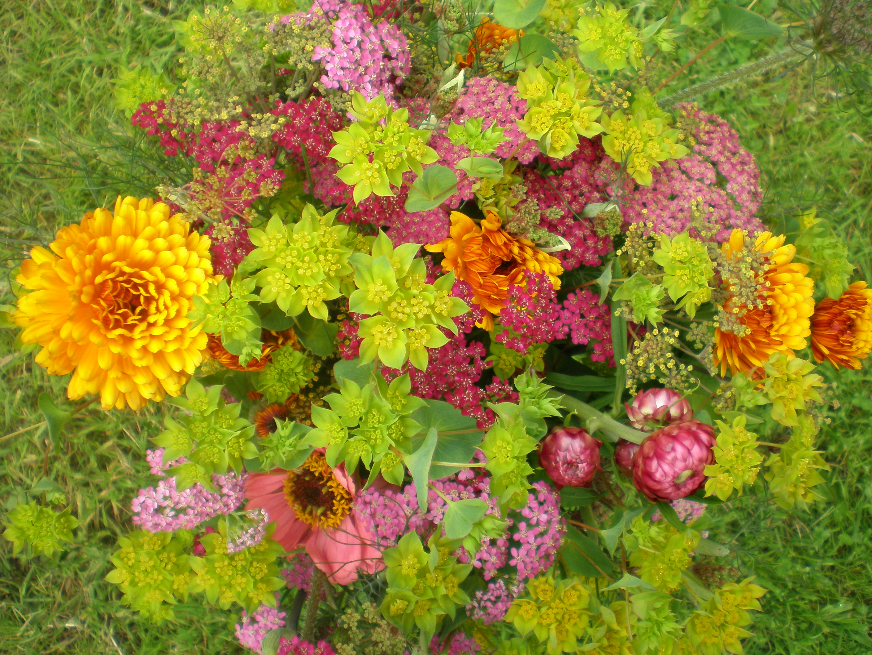 File Flower garden july 2012 061