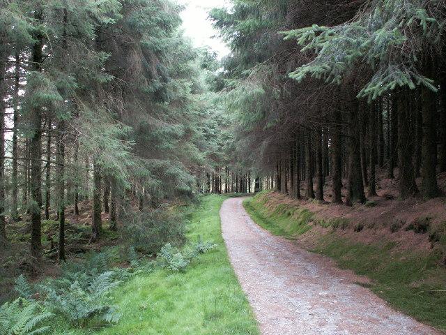 Forestry track, Llechwedd Gwinau - geograph.org.uk - 40035