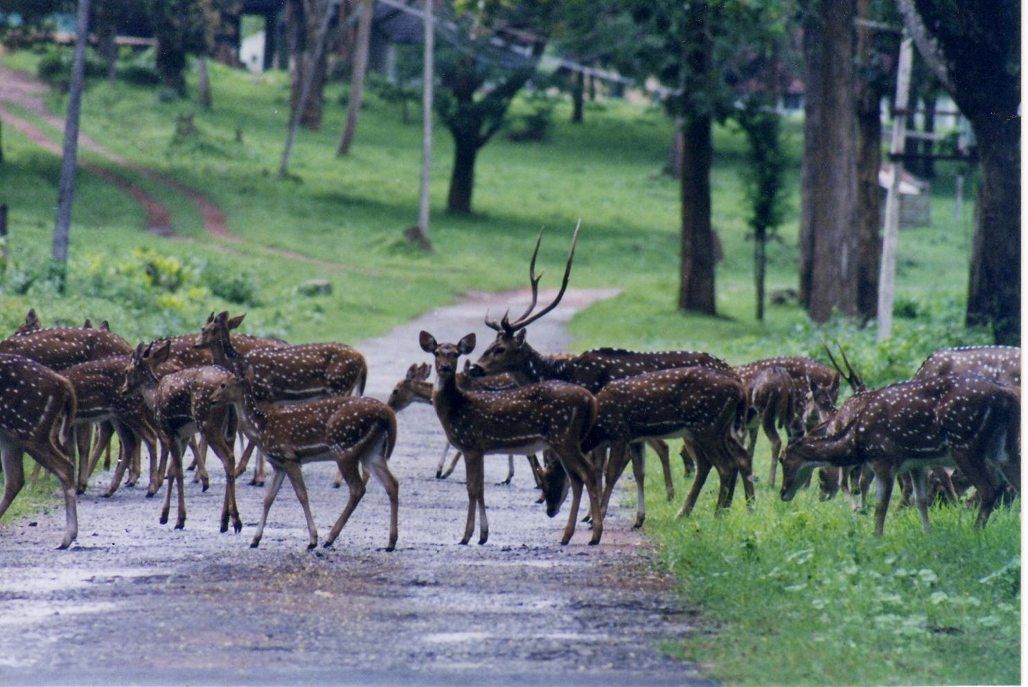 Bangalore To Coorg By Car Cost