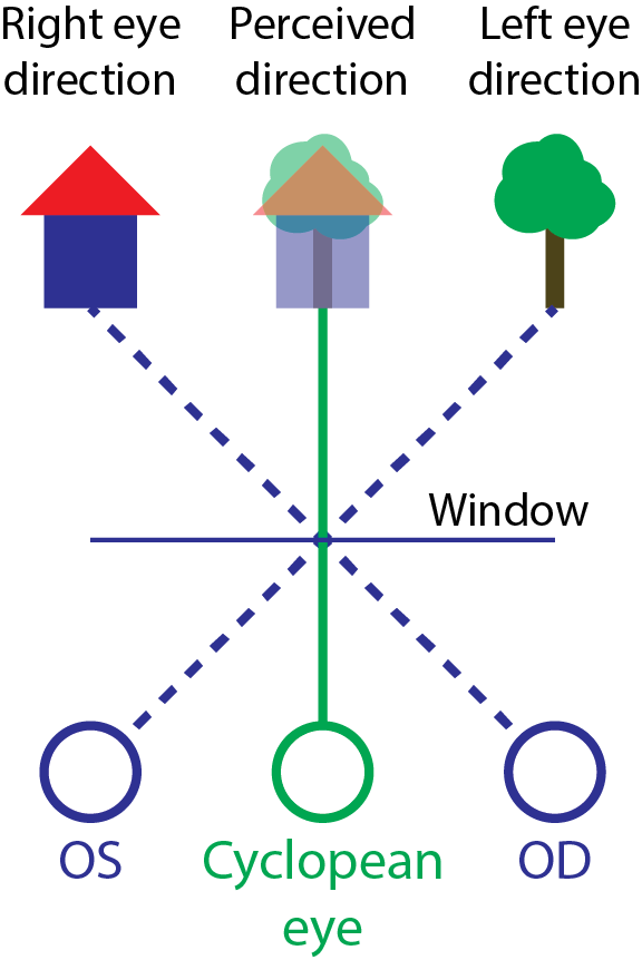 Hering S Law Of Visual Direction Wikipedia