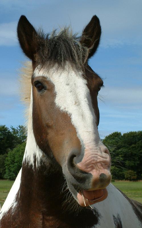 Horse close.jpg