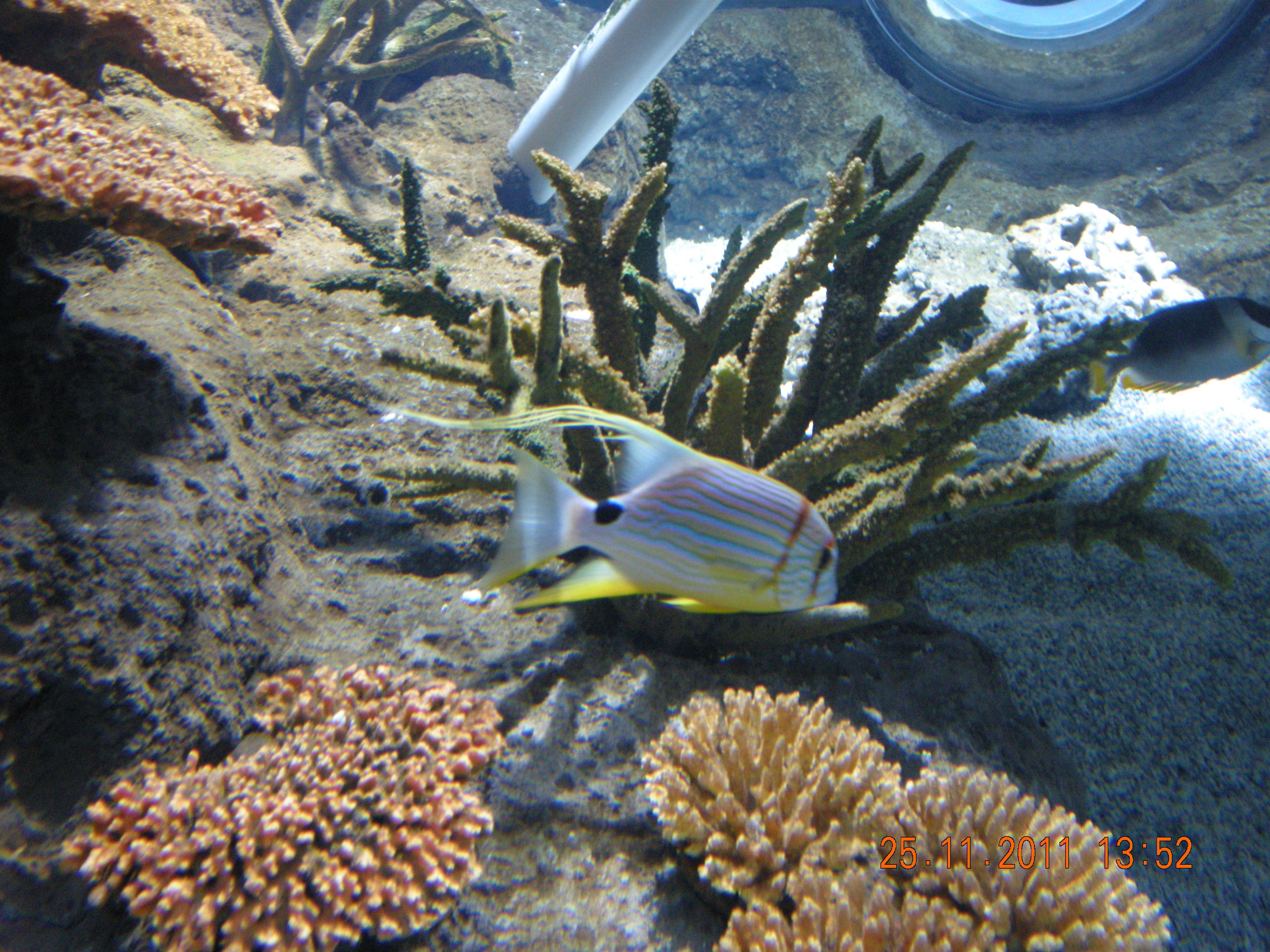 File:Istanbul Aquarium 34.jpg - Wikimedia Commons