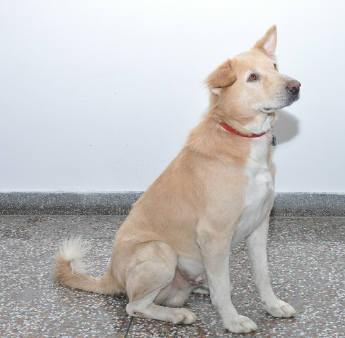 Nepal Breed Dog Names And Images