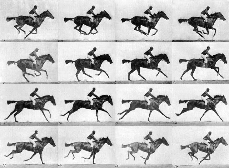 Muybridge race horse gallop