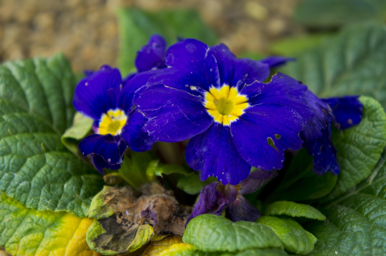 File:National Botanic Gardens, Dublin (6667118661)