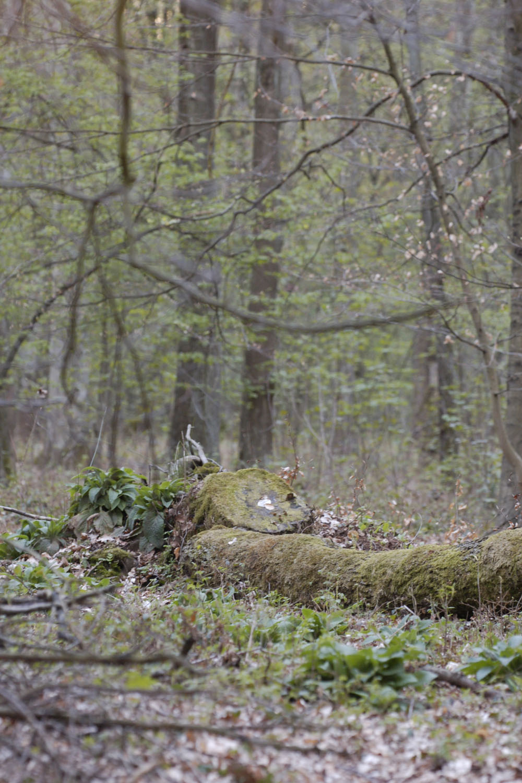 liste der naturwaldreservate in nordrhein westfalen. Black Bedroom Furniture Sets. Home Design Ideas