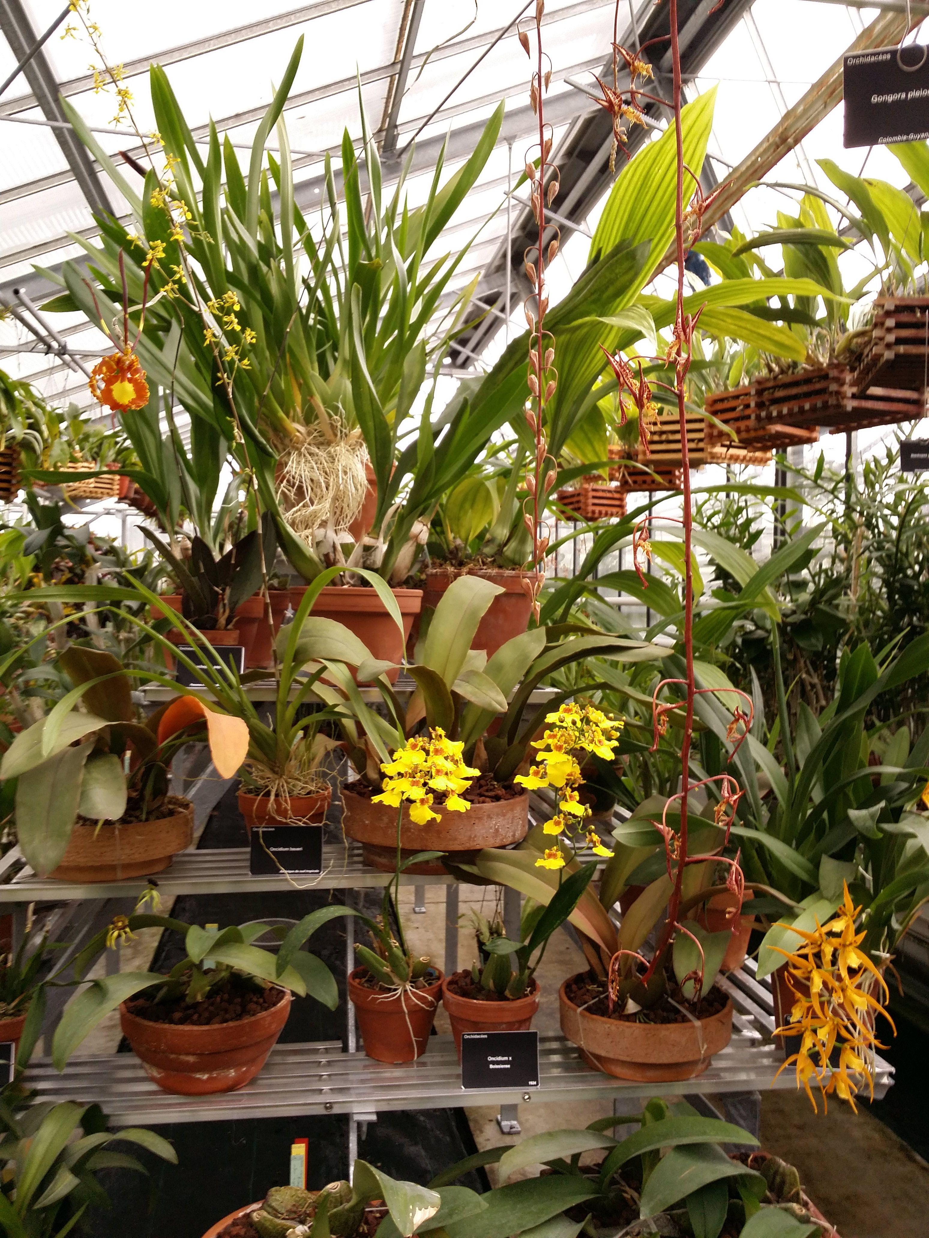 File:Orchidées dans une serre du jardin du Luxembourg.jpg ...