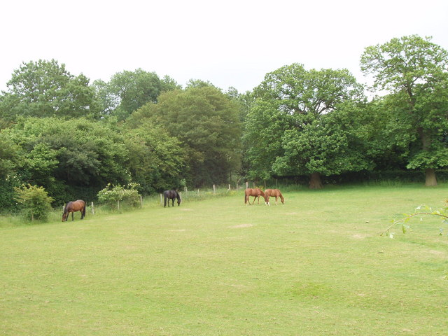Paddock with horses, by Berkhamsted Common - geograph.org.uk - 189780