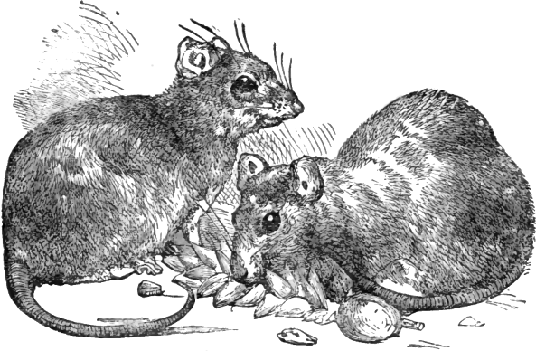 File:Page 147 illustration to Three hundred Aesop's fables (Townshend).png