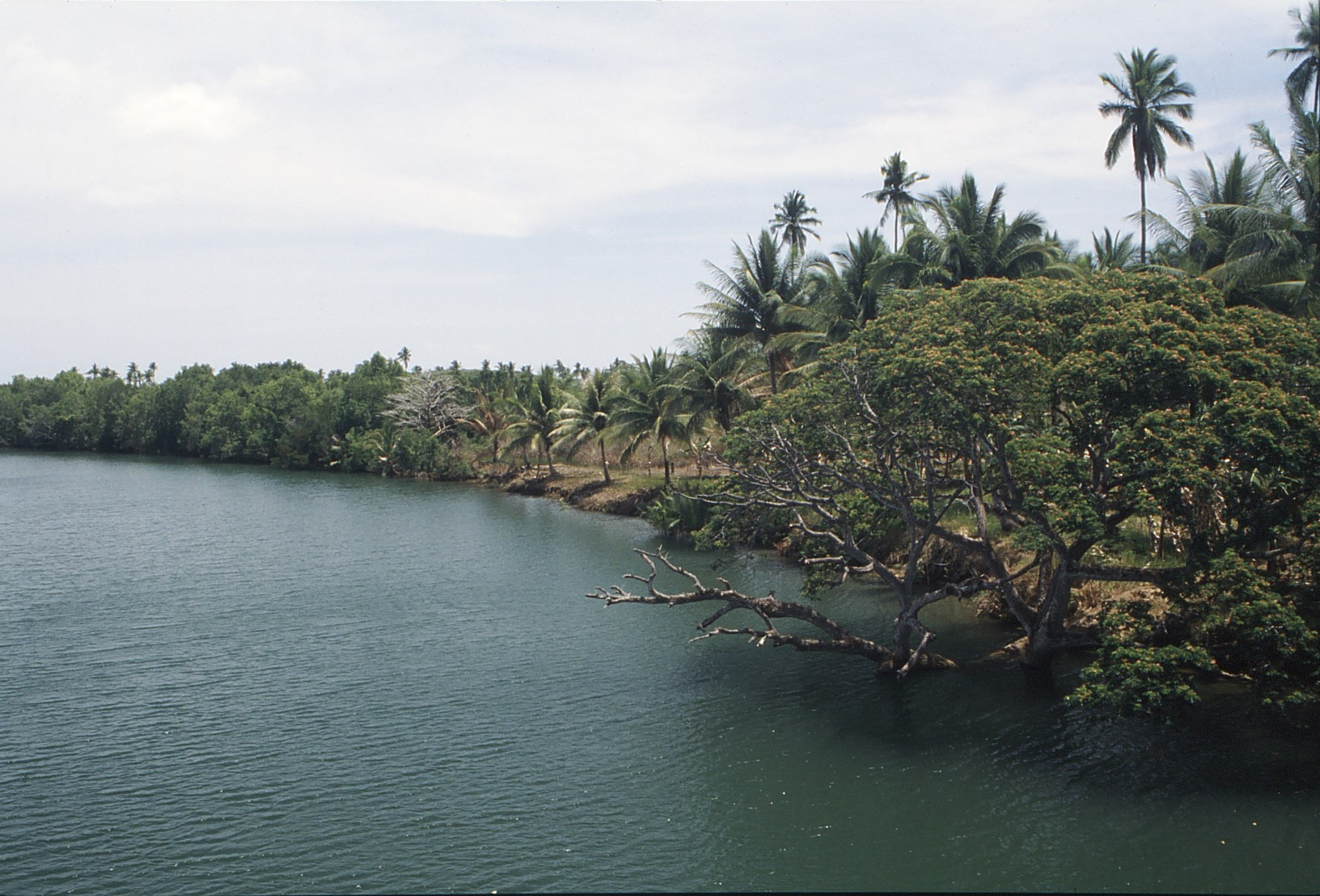 File:Palawan  River Bank.jpg