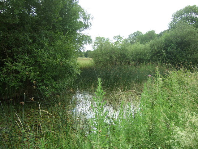 Pond at Castor Hanglands - geograph.org.uk - 1387192