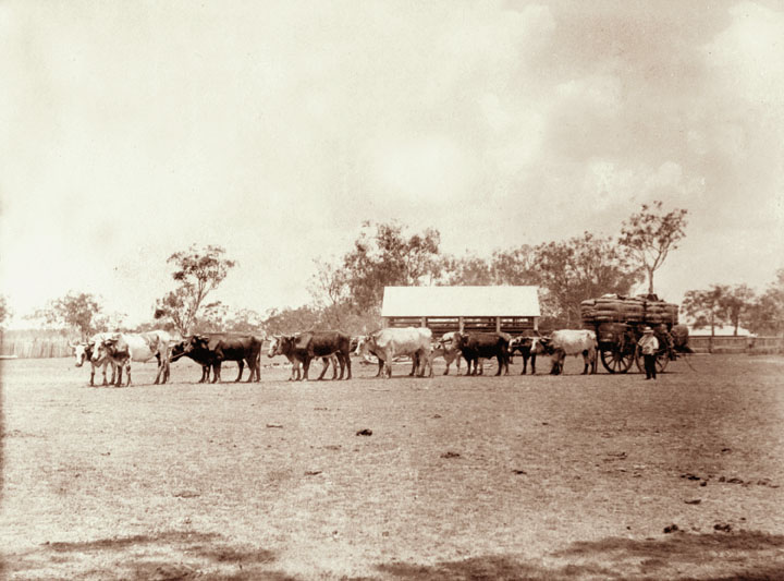 File:Queensland State Archives 2473 Bullock dray with wool from Yandilla  1898.png