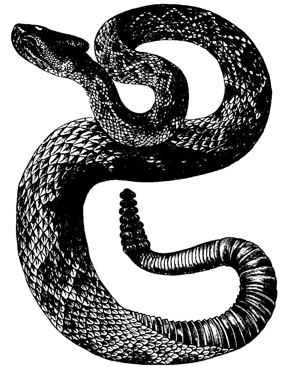 Snake Wiktionary
