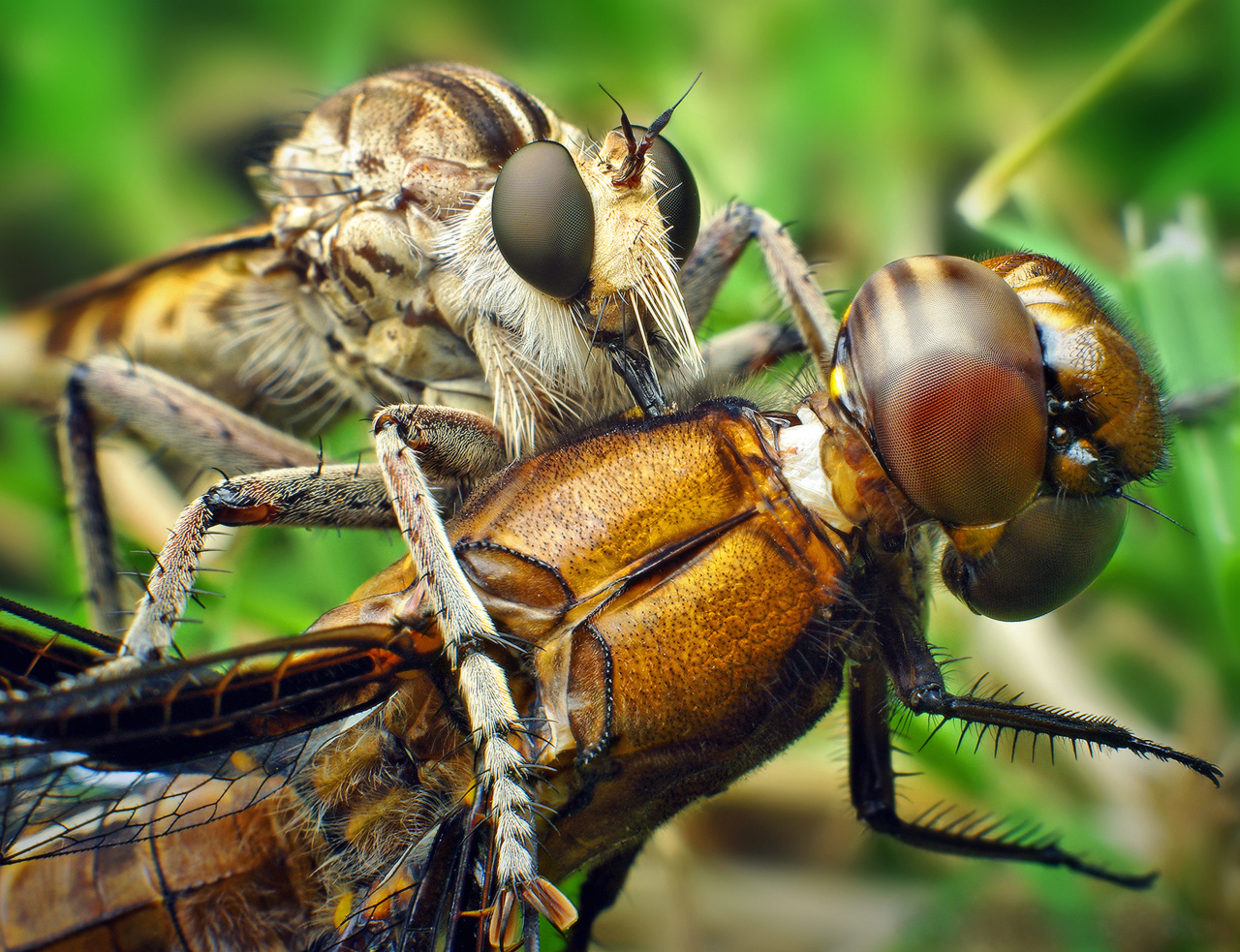 Mandible (arthropod mouthpart) - Wikipedia