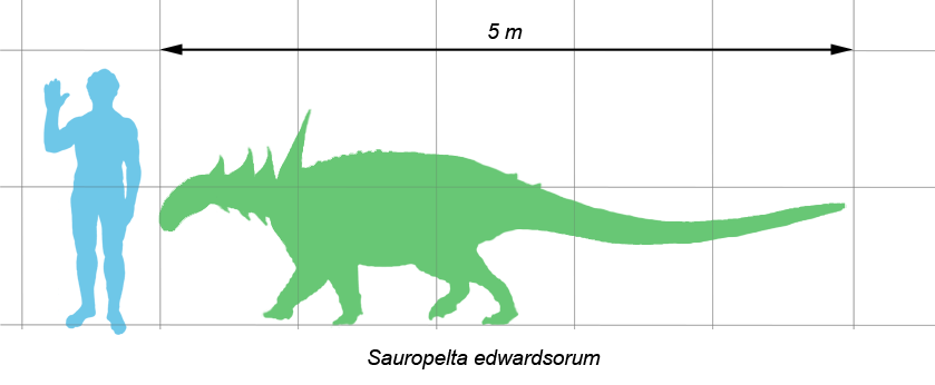 Sauropelta Information SheetSauropelta