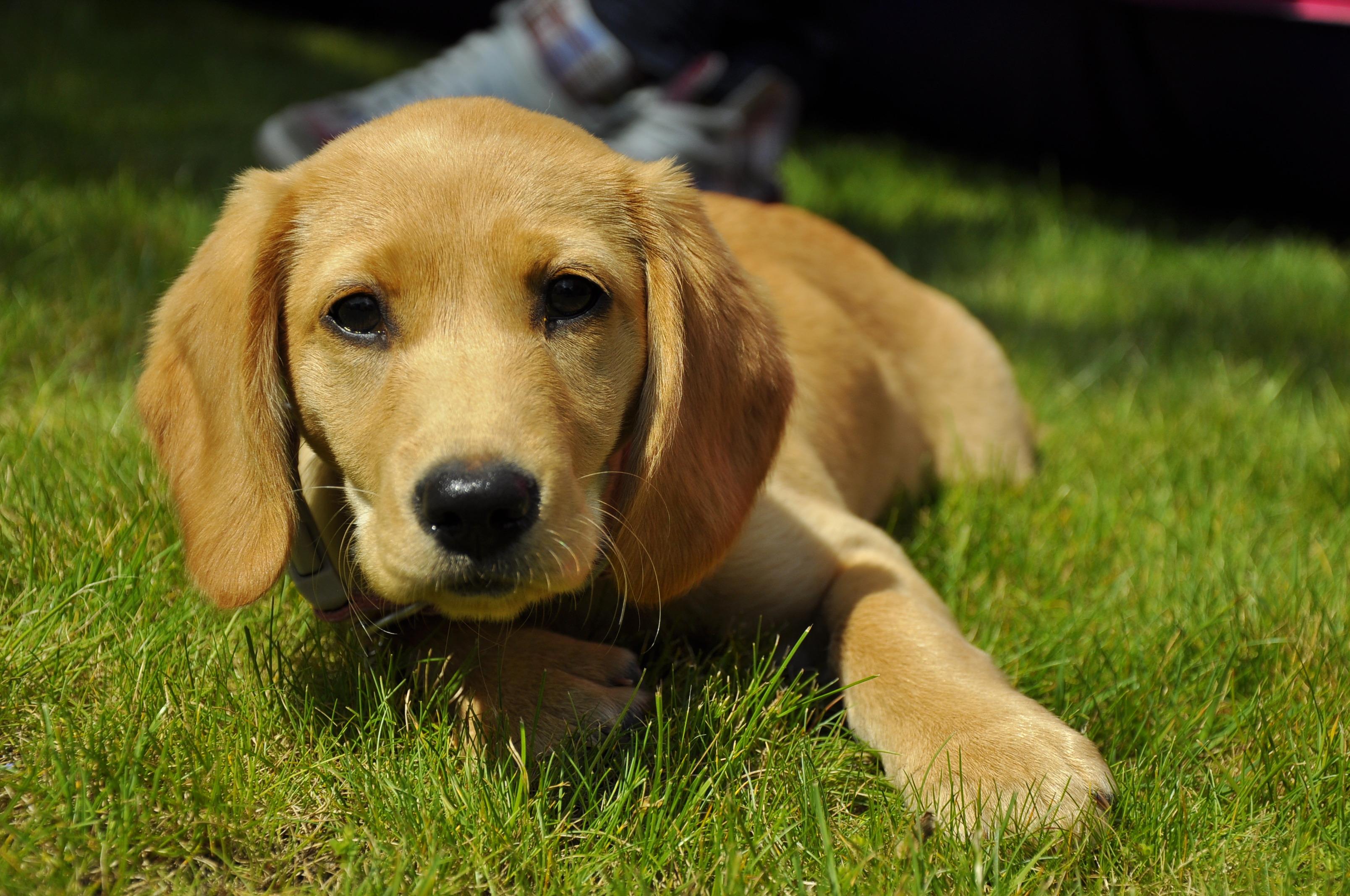 Dog Breeds Similar To Bichon Frise