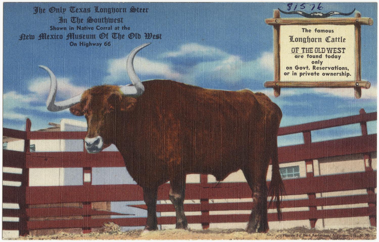 Schleich 13685 Texas Longhorn vaca nuevo con etiqueta banderilla s#1