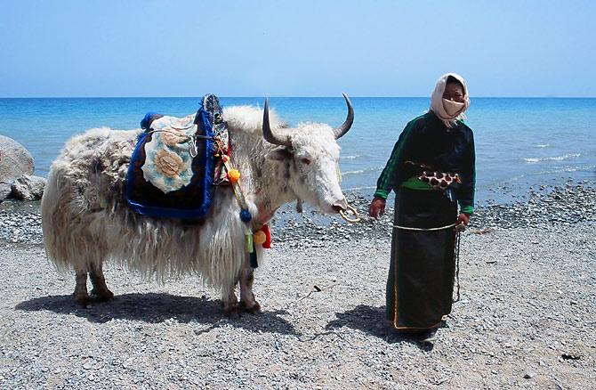 Woman_with_yak_at_Qinghai_Lake.jpg