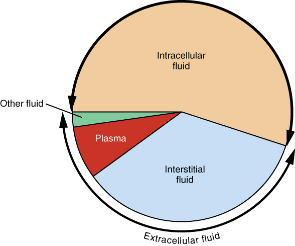 Make A Pie Chart In Excel: 2703 Distribution of Water in the Human Body in Terms of ICF ,Chart