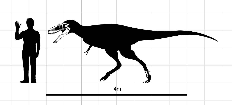 pictures of tyrannosaurus rex