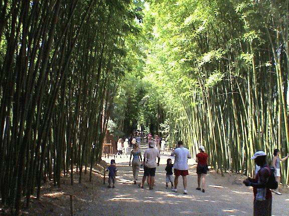 Bambouseraie De Prafrance Wikipedia