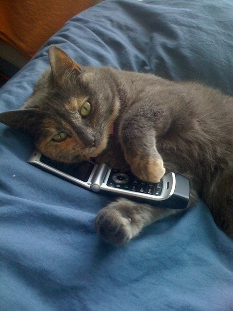 Bluebell on the phone Holistic vets you can consult with by phone