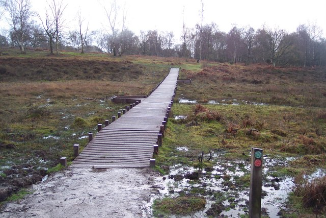 Boardwalk in Hothfield Common Nature Reserve, Kent