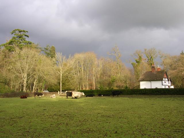 Bolderwood cottage, New Forest - geograph.org.uk - 94206