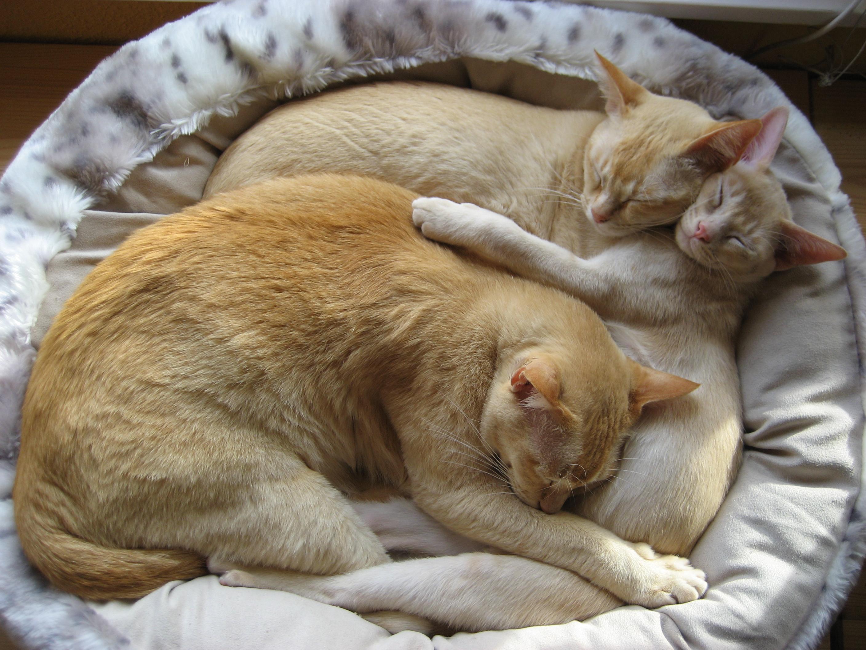 Resultado de imagen de camas para gatos