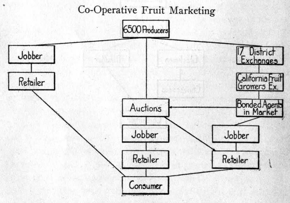 Flow Chart Of Distribution Channels: Channels of distribution Co-Operative Fruit Marketing 1915 ,Chart