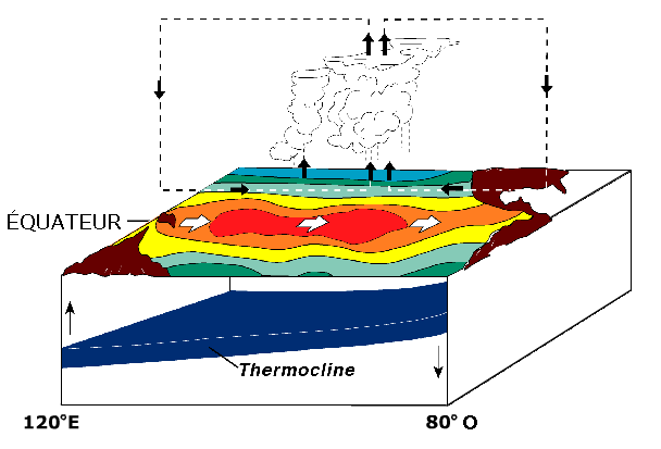Fichier:Circulation El Nino.png