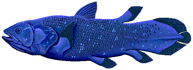 File:Coelacanth.png - Wikimedia Commons Латимерия
