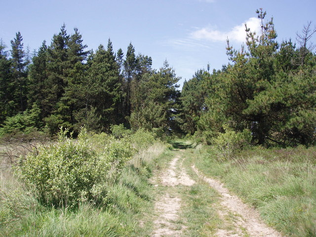 Croft Pascoe Forest - geograph.org.uk - 186575