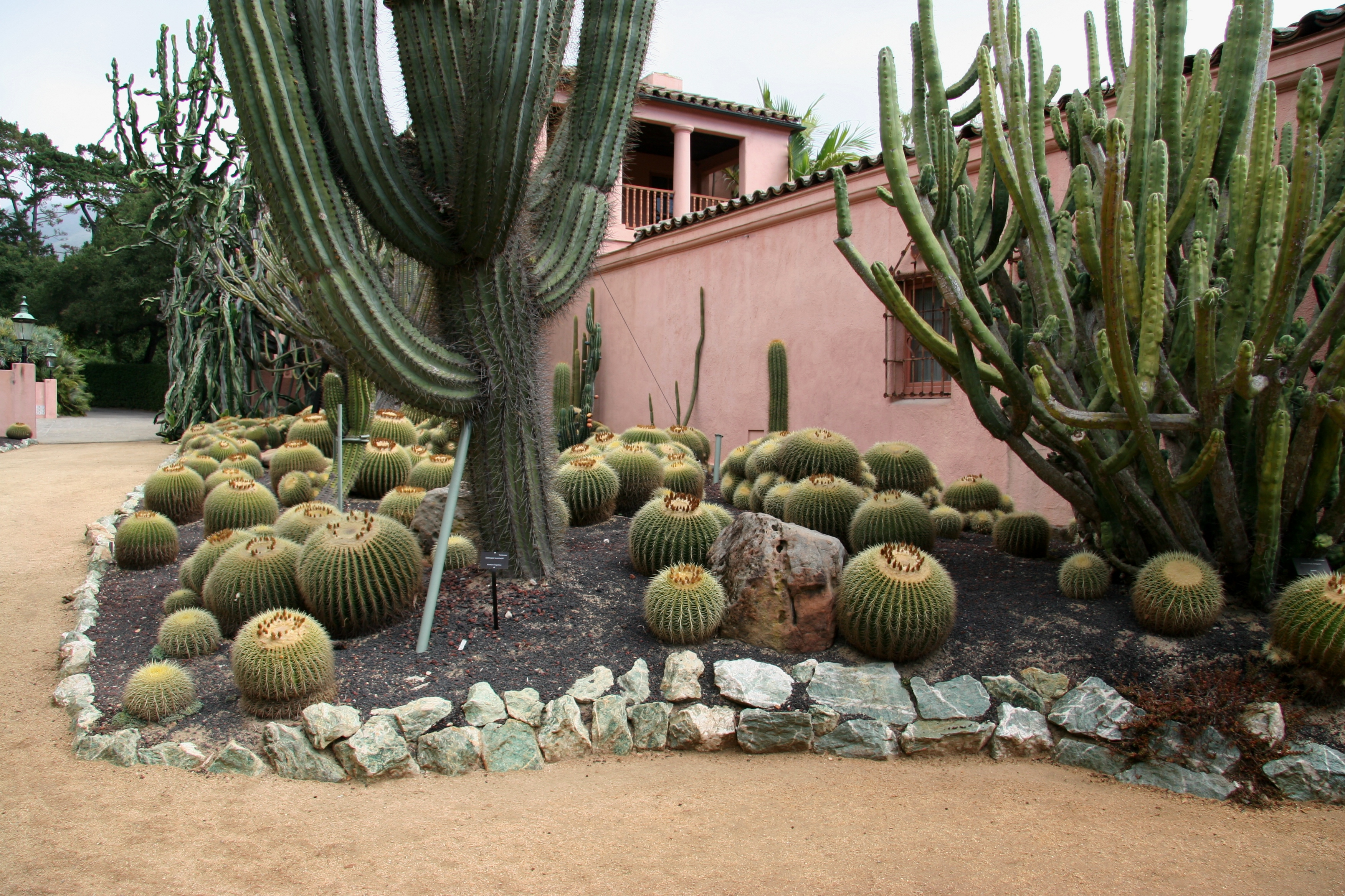 File:Flickr   Brewbooks   Cacti And Euphorbia Garden, Lotusland (1).