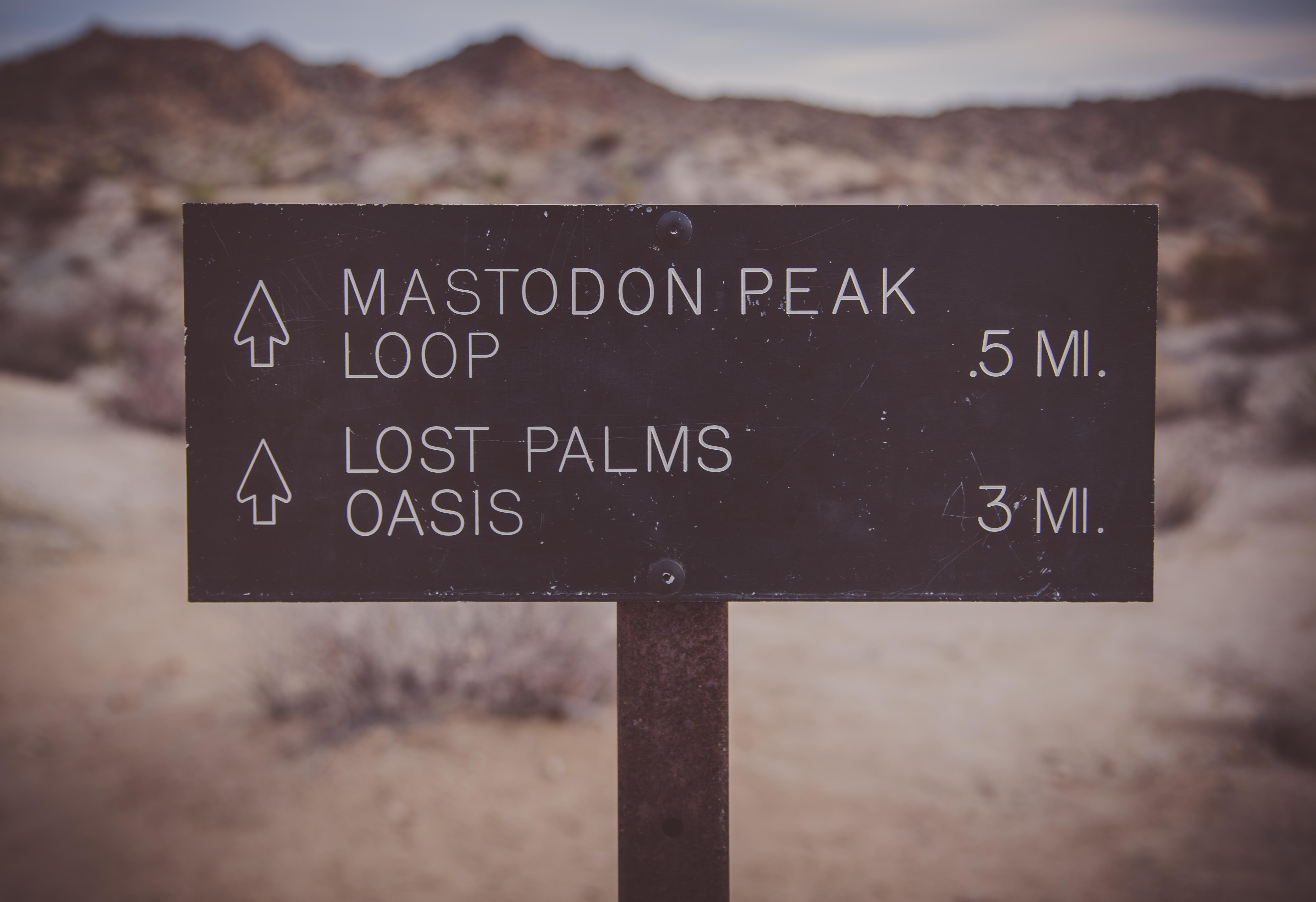 Lost Palms Oasis Trail Joshua Tree National Park Wikipedia
