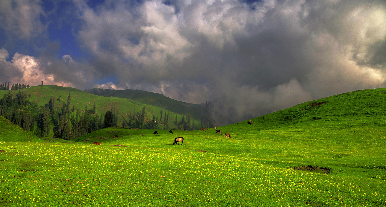filelush green paye meadows shogran valley kpk