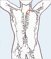https://upload.wikimedia.org/wikipedia/commons/4/4b/Lymphatic_system2.png