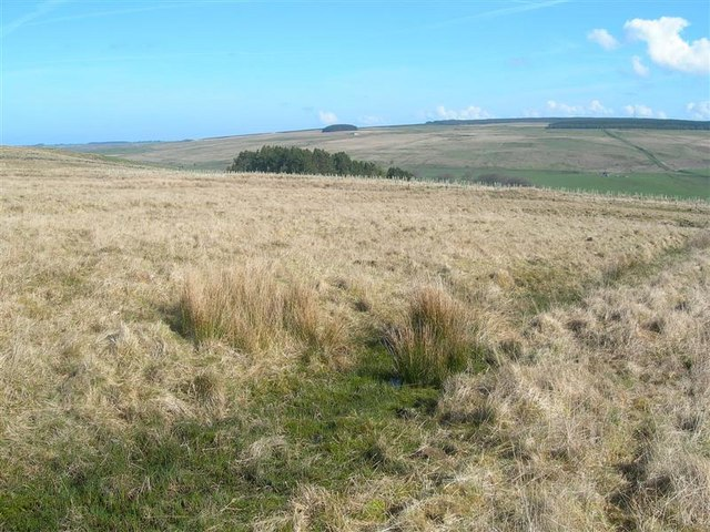 http://upload.wikimedia.org/wikipedia/commons/4/4b/Moorland_View_-_geograph.org.uk_-_791397.jpg