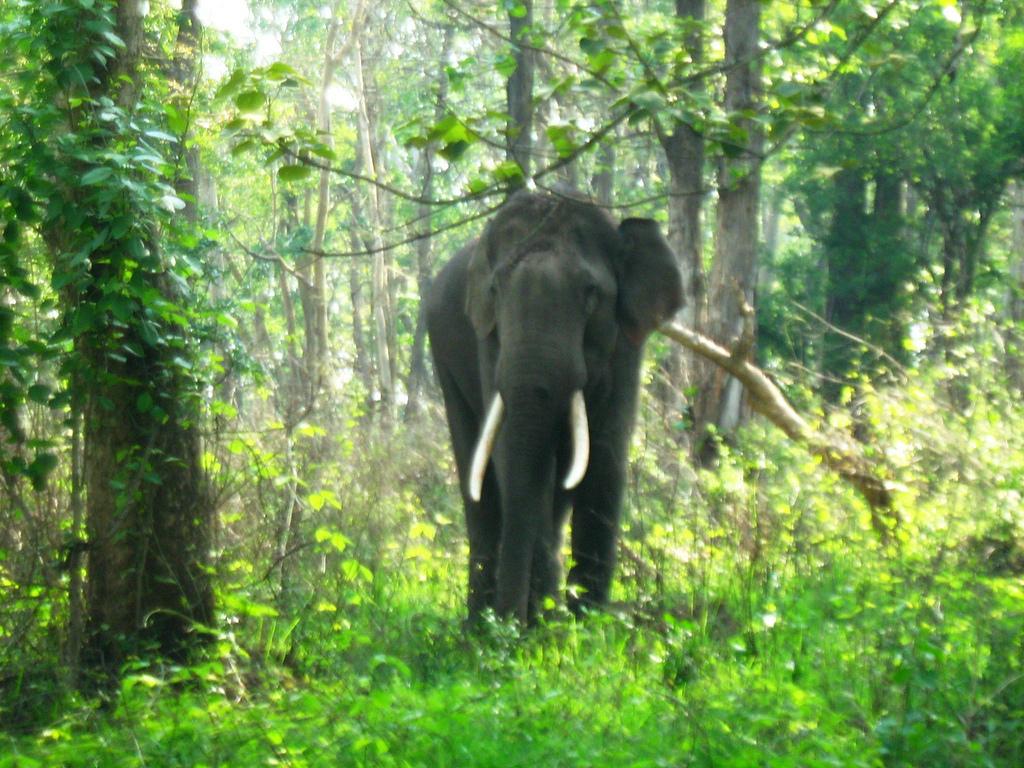 India to Host UN Wildlife Summit in 2020