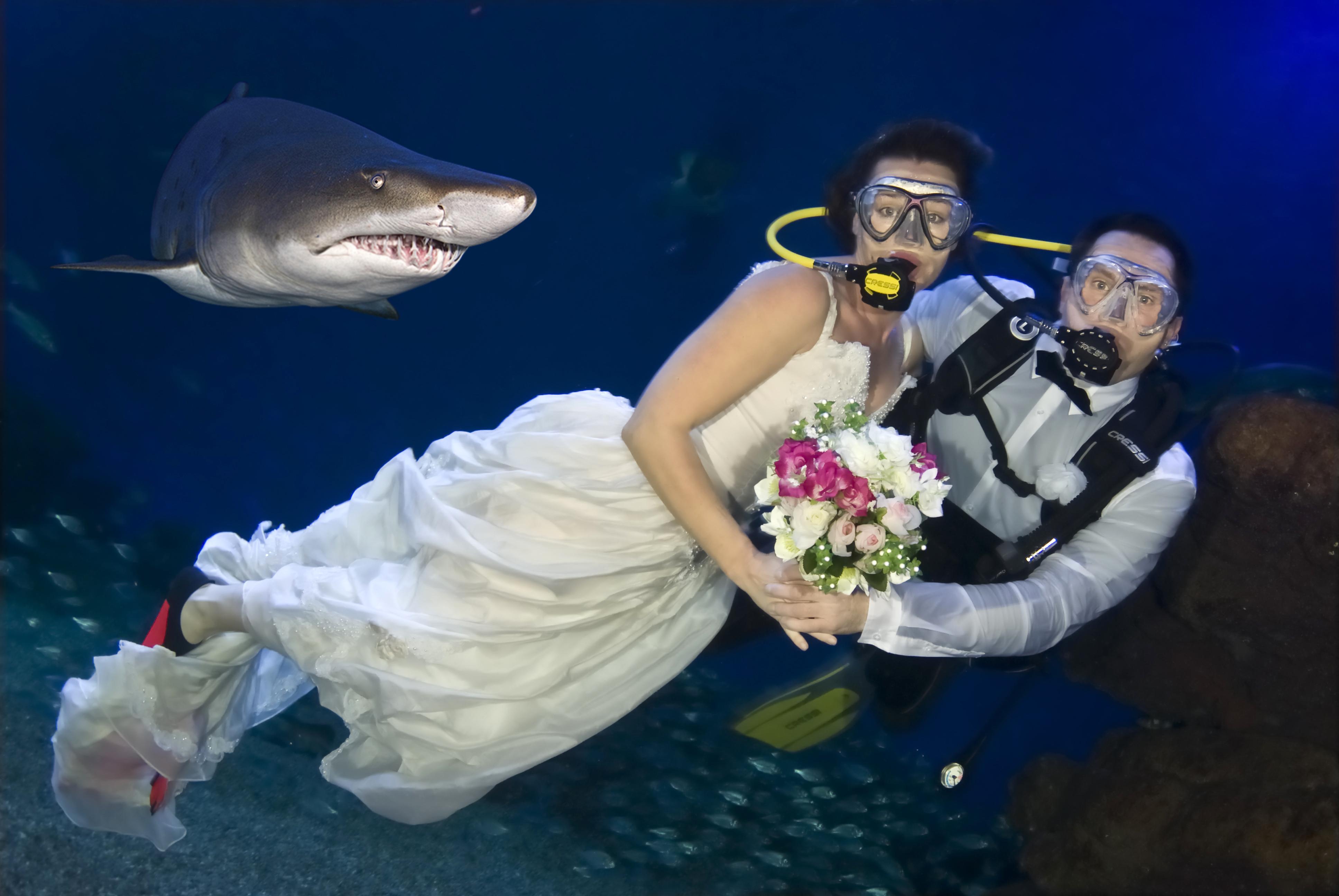 Image Result For Dallas Aquarium